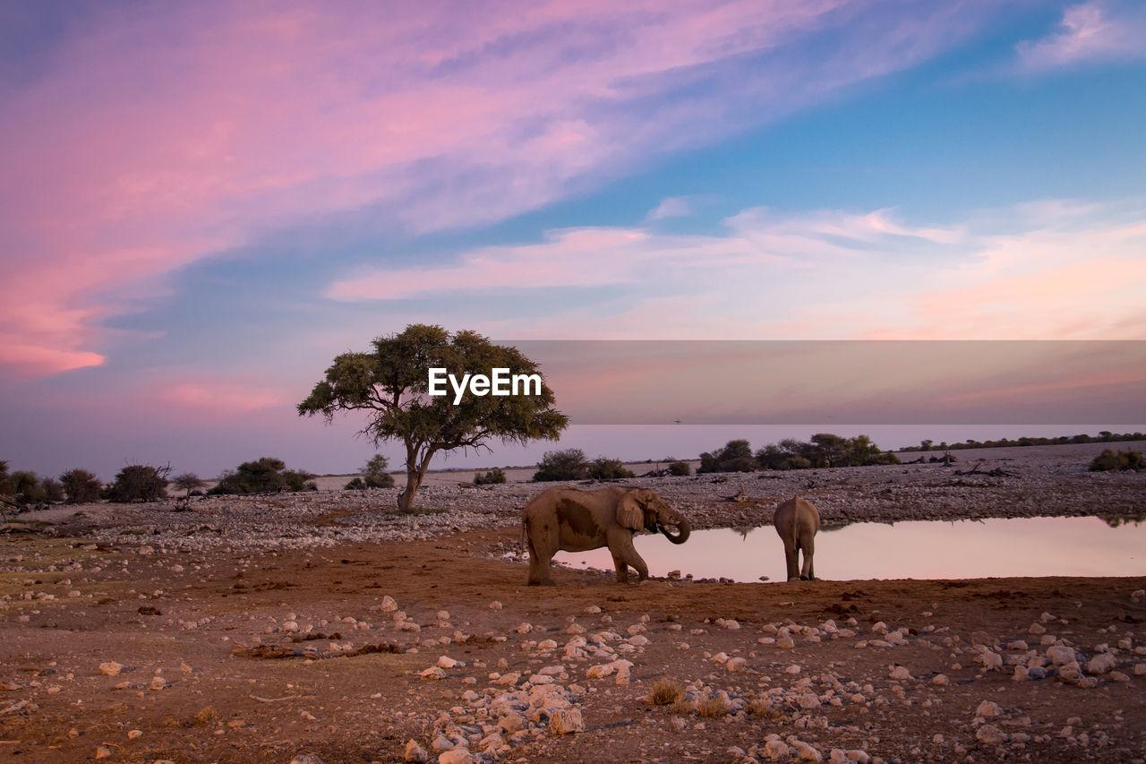 Elephants on landscape against sky