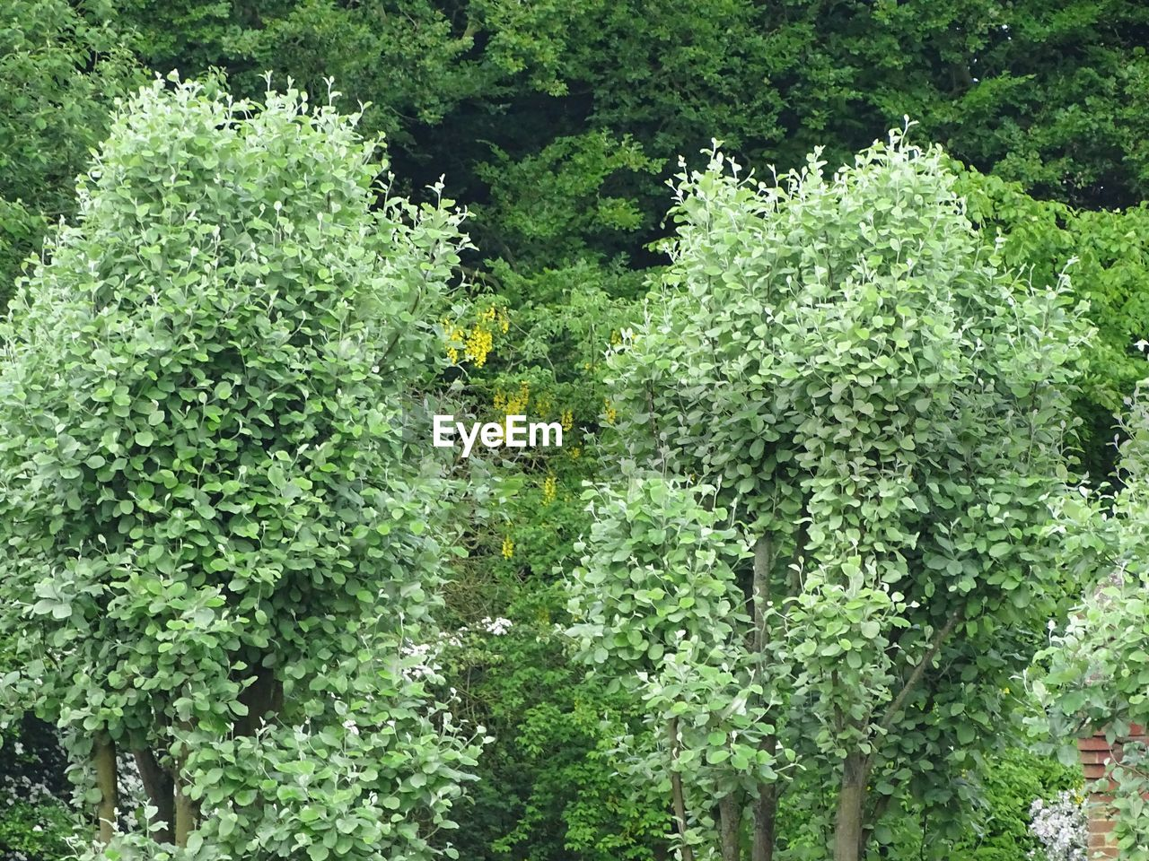 growth, green color, plant, nature, tree, day, no people, outdoors, beauty in nature, freshness