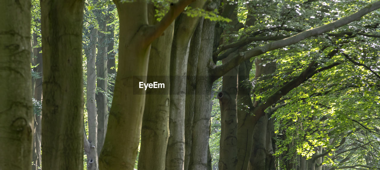 plant, tree, growth, forest, green color, beauty in nature, no people, land, tranquility, tree trunk, nature, trunk, day, outdoors, bamboo - plant, bamboo, close-up, bamboo grove, woodland, focus on foreground