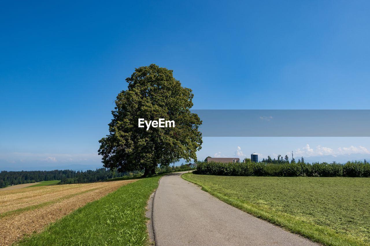 Empty road along trees on field against blue sky