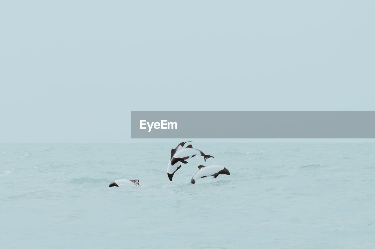 Dolphins diving in sea against sky