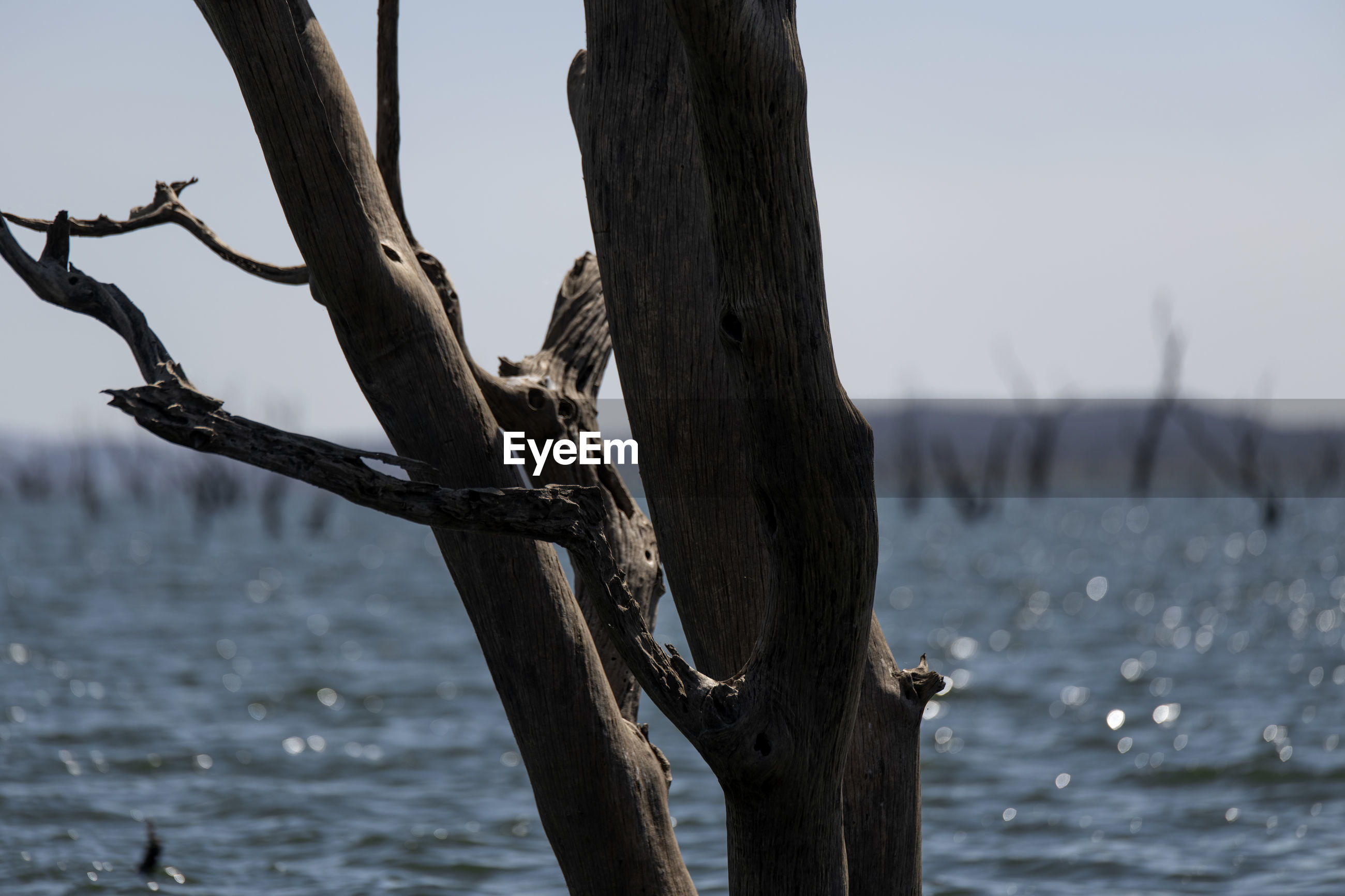 Driftwood on tree trunk by sea against sky