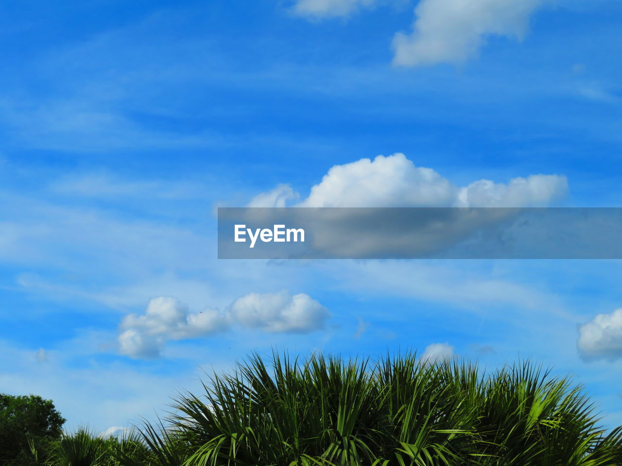 cloud - sky, sky, tree, plant, beauty in nature, tranquility, blue, no people, scenics - nature, day, growth, nature, tranquil scene, outdoors, low angle view, non-urban scene, green color, palm tree, idyllic, tropical climate, palm leaf