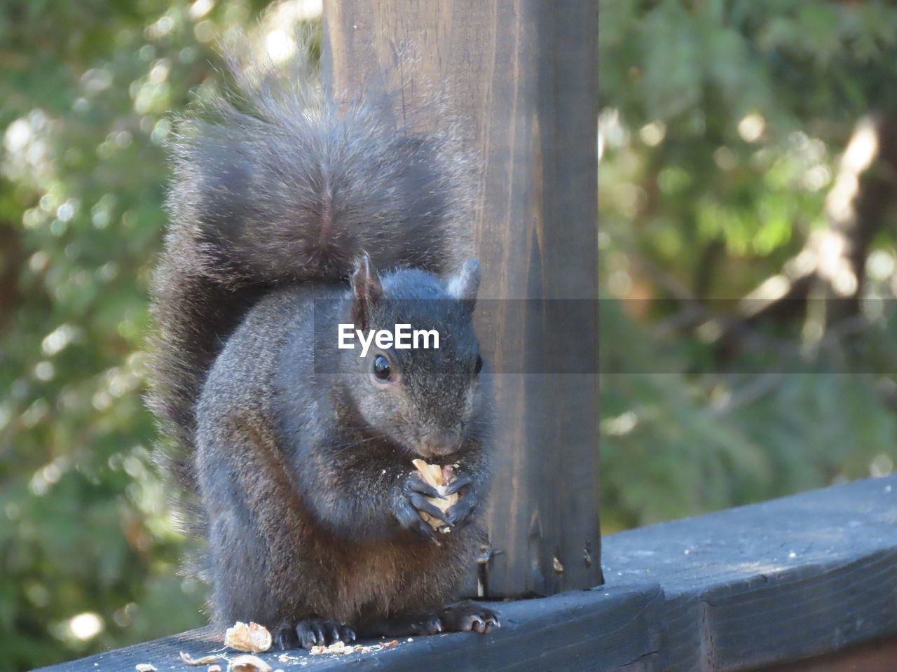 animal, animal themes, animal wildlife, mammal, one animal, animals in the wild, vertebrate, rodent, focus on foreground, squirrel, day, no people, nature, close-up, tree, plant, outdoors, wood - material, sunlight, portrait, whisker
