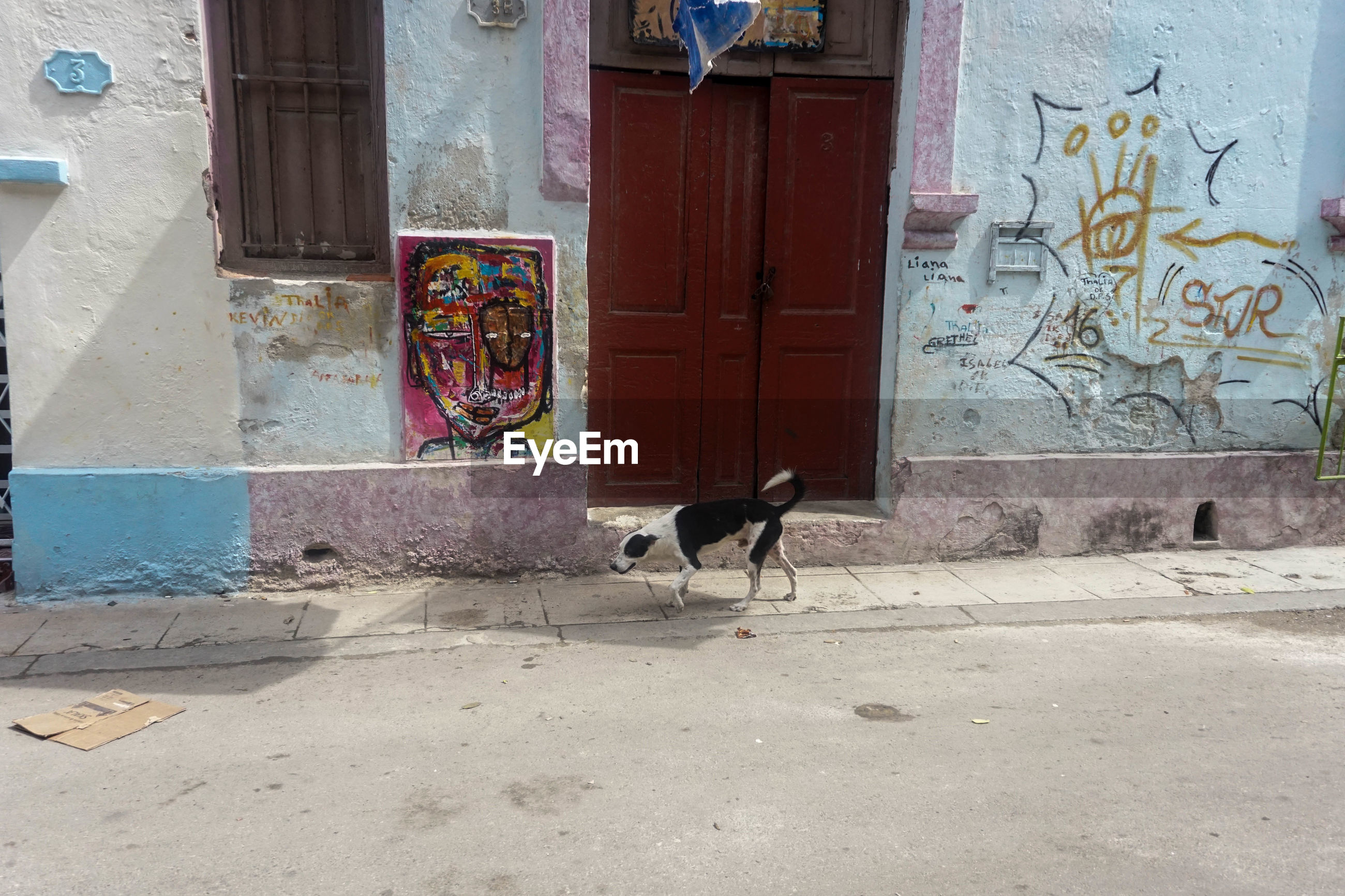 animal themes, one animal, mammal, built structure, door, day, architecture, domestic animals, building exterior, outdoors, no people, pets