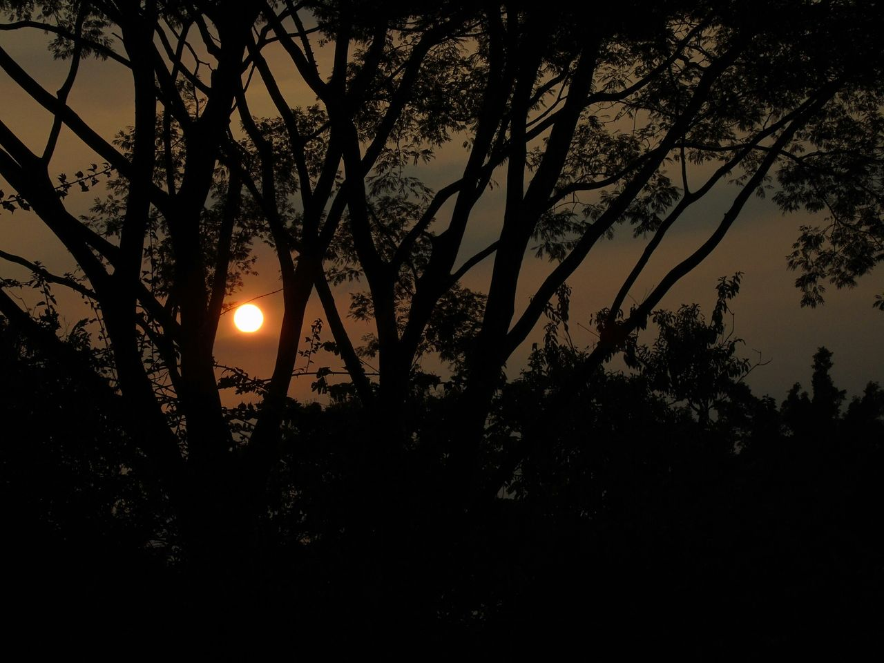 tree, moon, sun, silhouette, sunset, beauty in nature, nature, tranquil scene, tranquility, scenics, no people, outdoors, growth, sky, moonlight, illuminated, astronomy