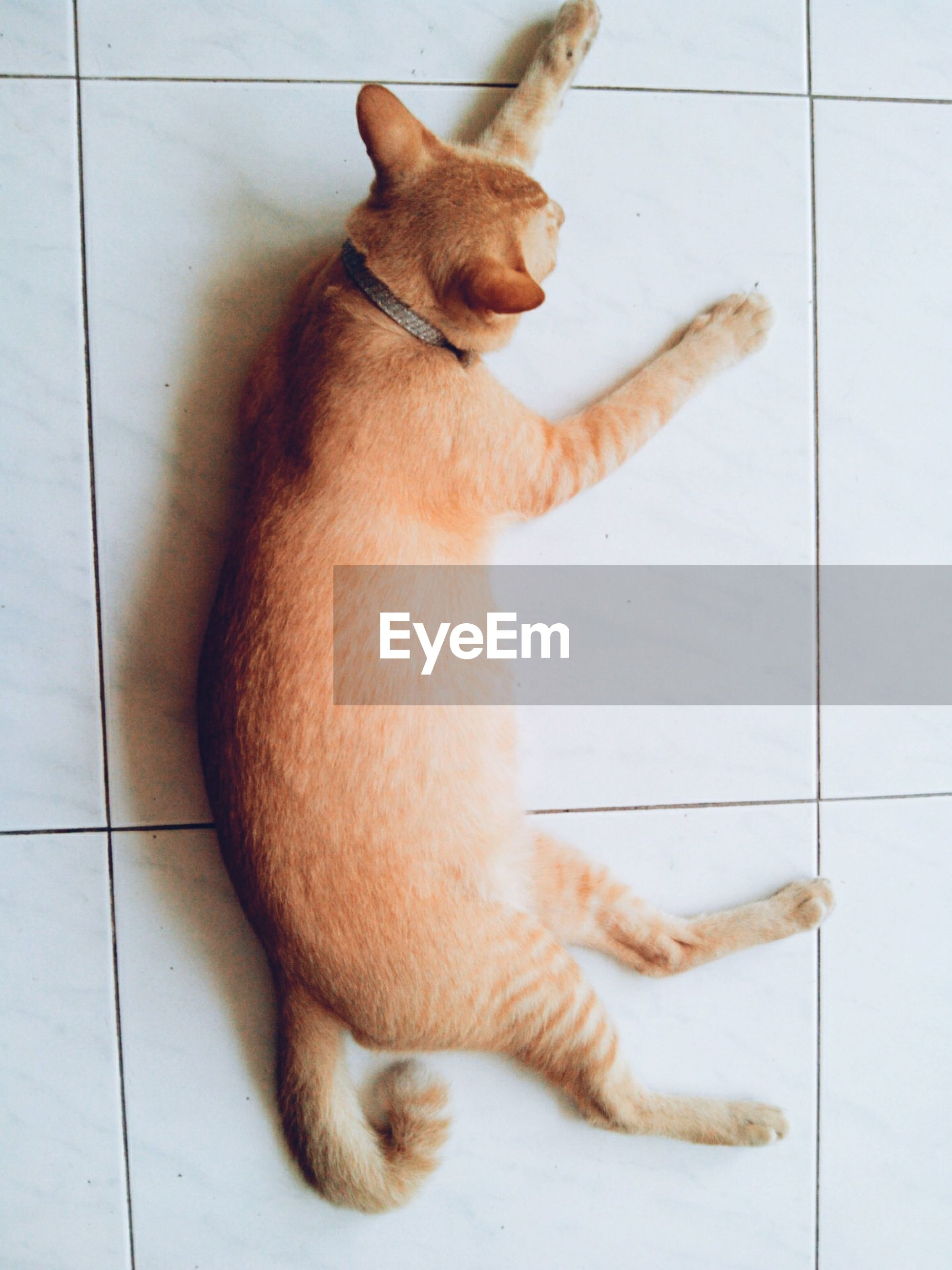 domestic animals, pets, animal themes, mammal, one animal, domestic cat, indoors, cat, relaxation, feline, lying down, resting, high angle view, flooring, home interior, full length, tiled floor, sitting, home, dog