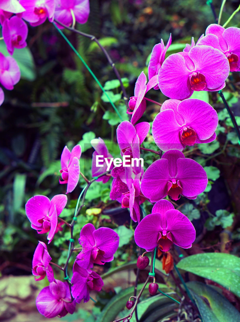 flower, pink color, growth, petal, beauty in nature, plant, nature, focus on foreground, no people, fragility, flower head, day, blooming, outdoors, close-up, freshness
