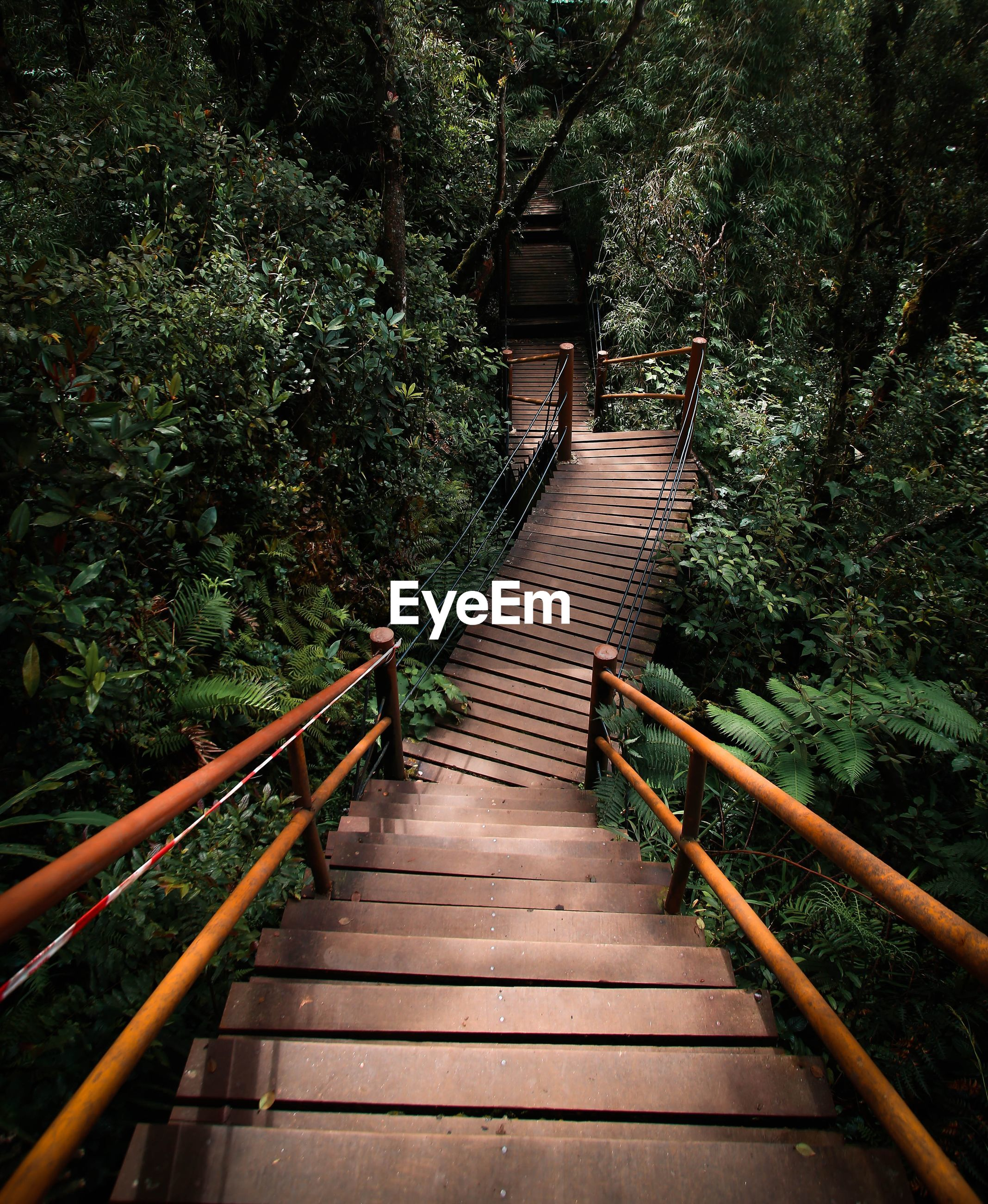 Wooden footbridge over trees in forest
