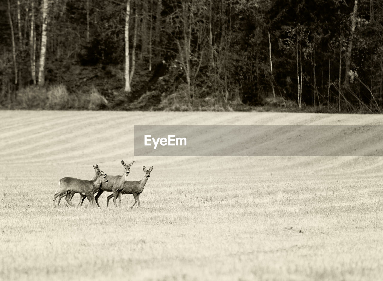 Side View Of Deer On Field At Forest