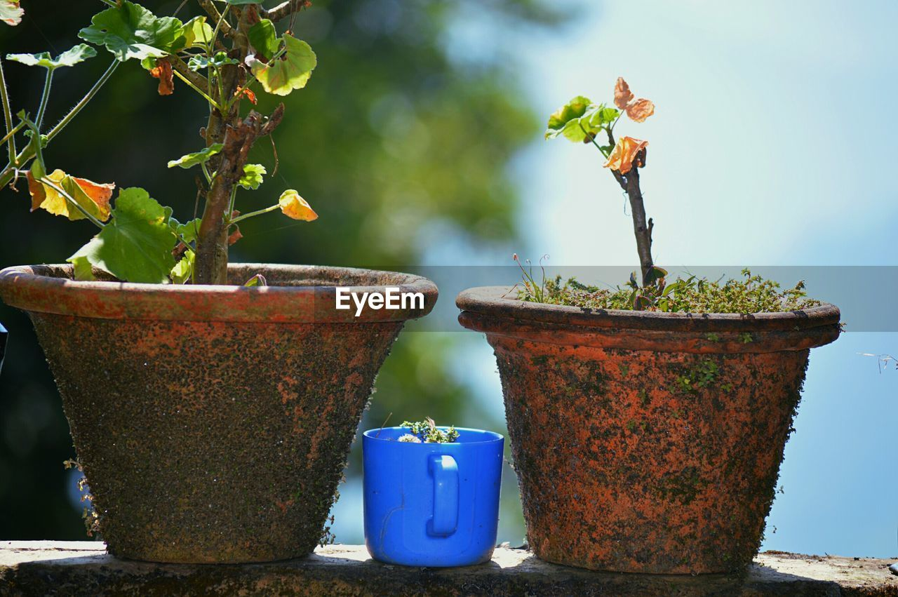 growth, potted plant, plant, no people, day, outdoors, tree, close-up, nature
