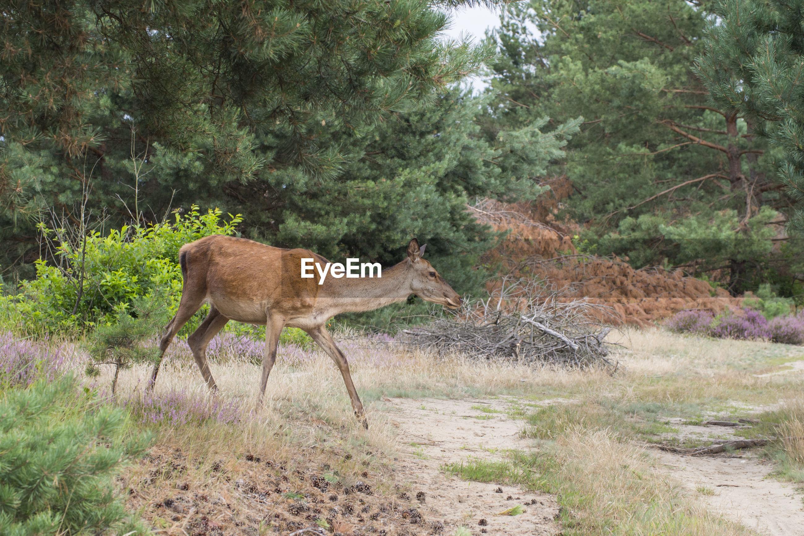 SQUIRREL IN FOREST