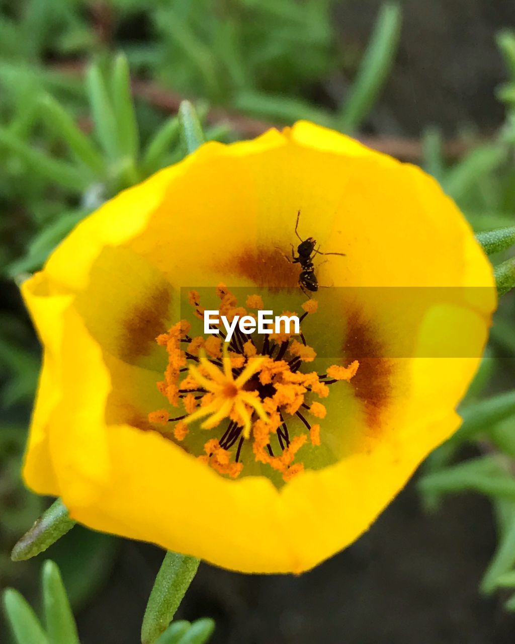 flower, yellow, insect, animal themes, fragility, petal, bee, nature, animals in the wild, freshness, one animal, growth, beauty in nature, outdoors, flower head, day, honey bee, close-up, pollen, no people, blossom, plant, selective focus, springtime, pollination, stamen, buzzing