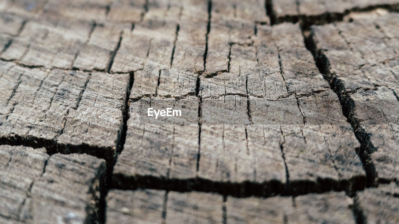 full frame, pattern, wood - material, textured, backgrounds, cracked, close-up, no people, tree, selective focus, day, nature, bark, outdoors, dry, tree stump, rough, natural pattern, damaged, tree ring, wood, climate, arid climate, concentric
