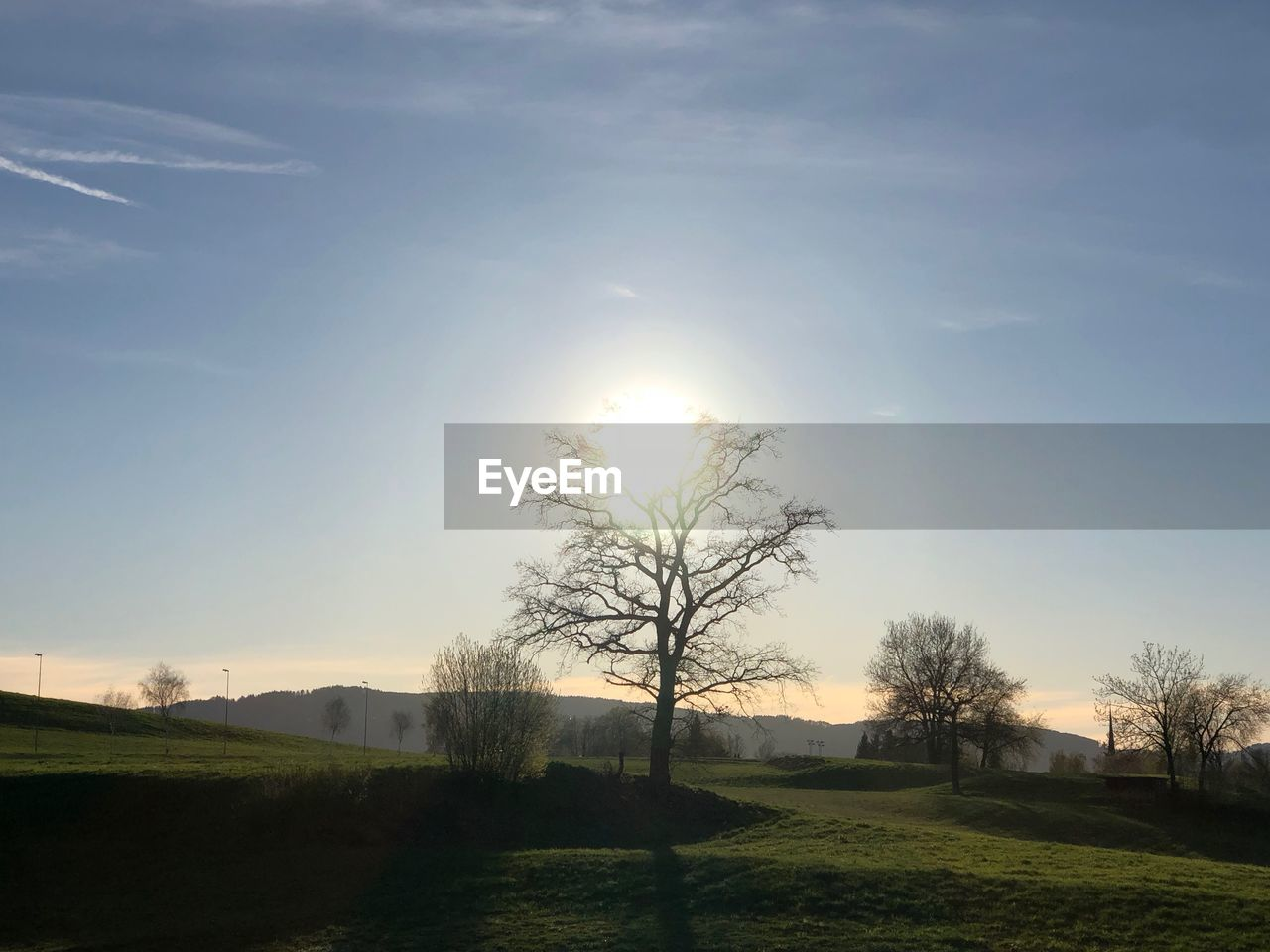 sky, plant, tree, sun, beauty in nature, tranquil scene, scenics - nature, tranquility, sunlight, grass, landscape, nature, field, environment, no people, land, non-urban scene, sunset, growth, outdoors, lens flare, bright