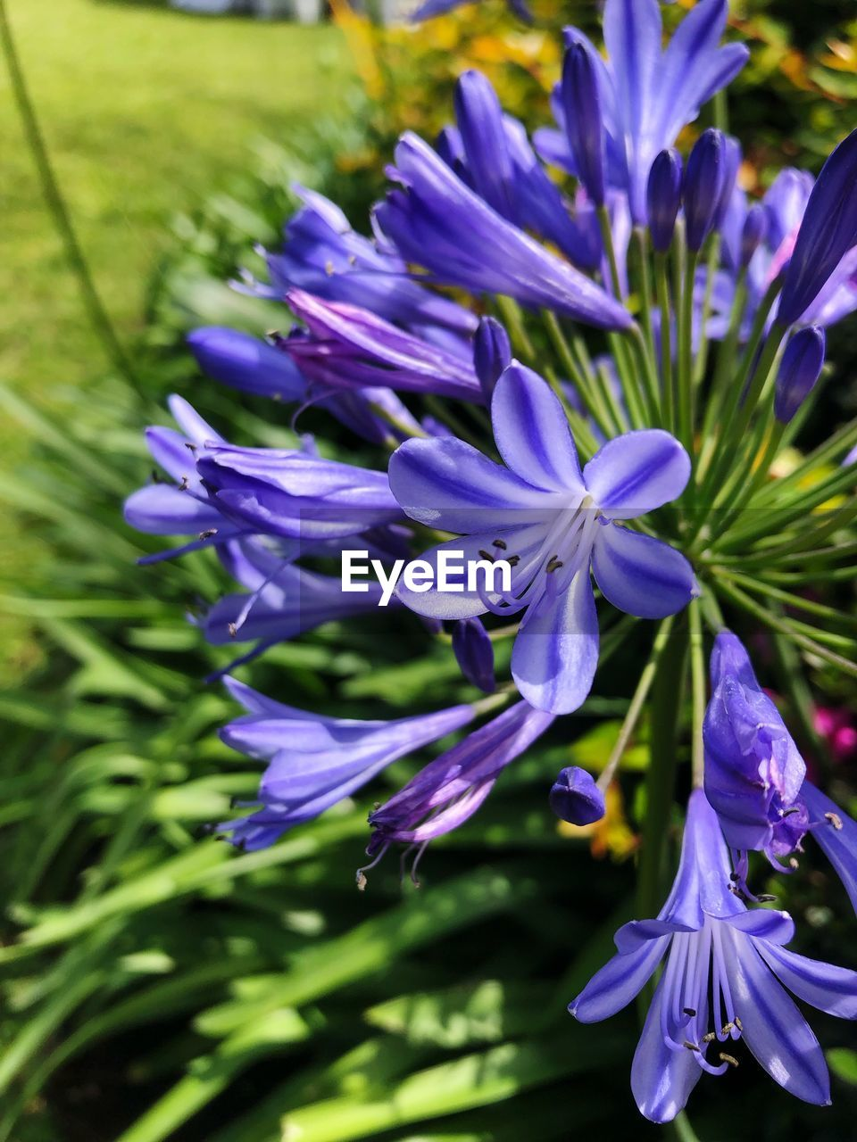 flowering plant, flower, purple, plant, fragility, vulnerability, beauty in nature, growth, freshness, petal, nature, inflorescence, close-up, flower head, no people, field, focus on foreground, day, blossom, selective focus, spring