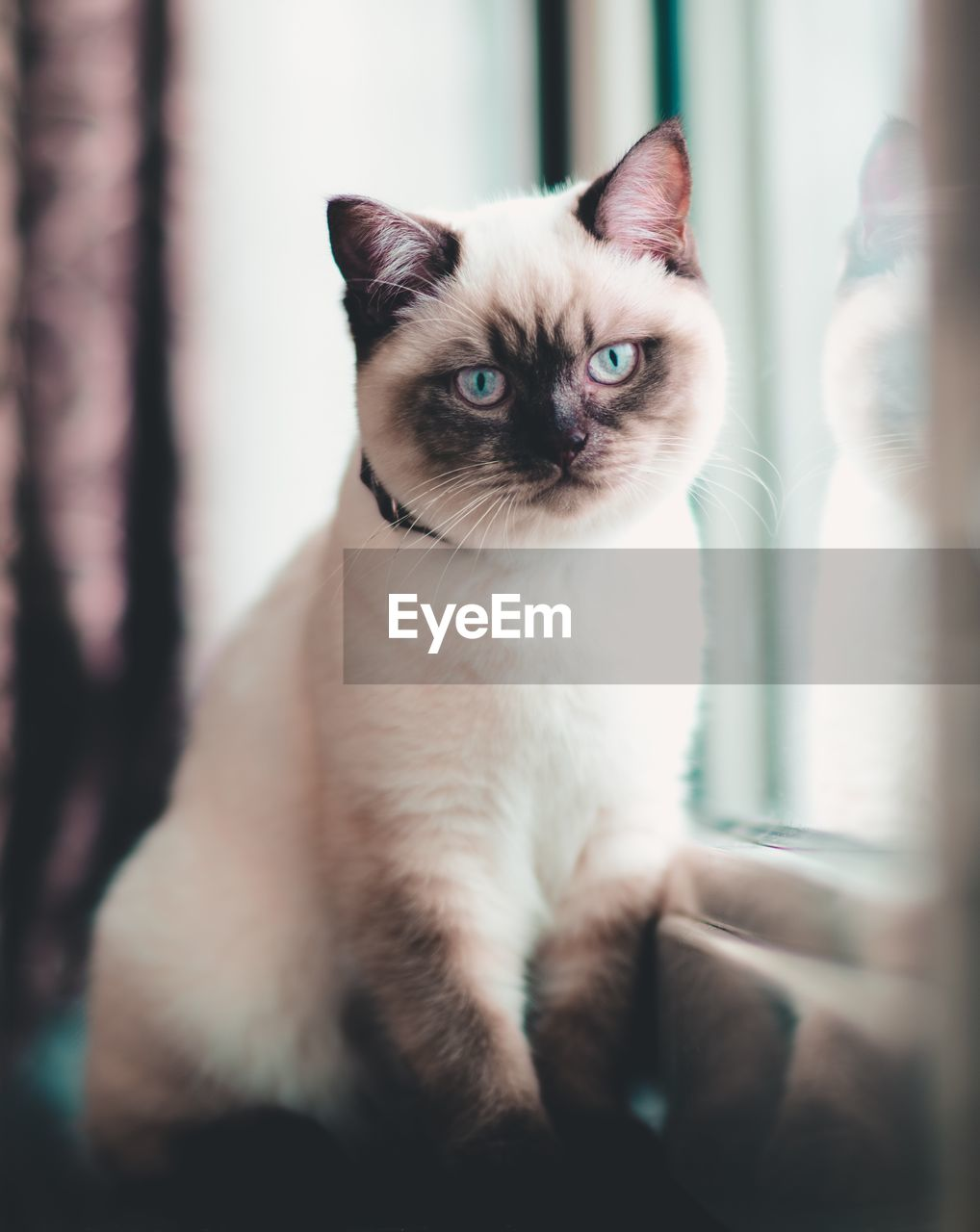 pets, domestic, cat, domestic animals, domestic cat, mammal, feline, one animal, vertebrate, indoors, portrait, no people, selective focus, looking at camera, close-up, whisker, sitting, animal eye