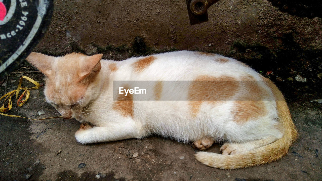 HIGH ANGLE VIEW OF GINGER CAT SLEEPING ON STREET