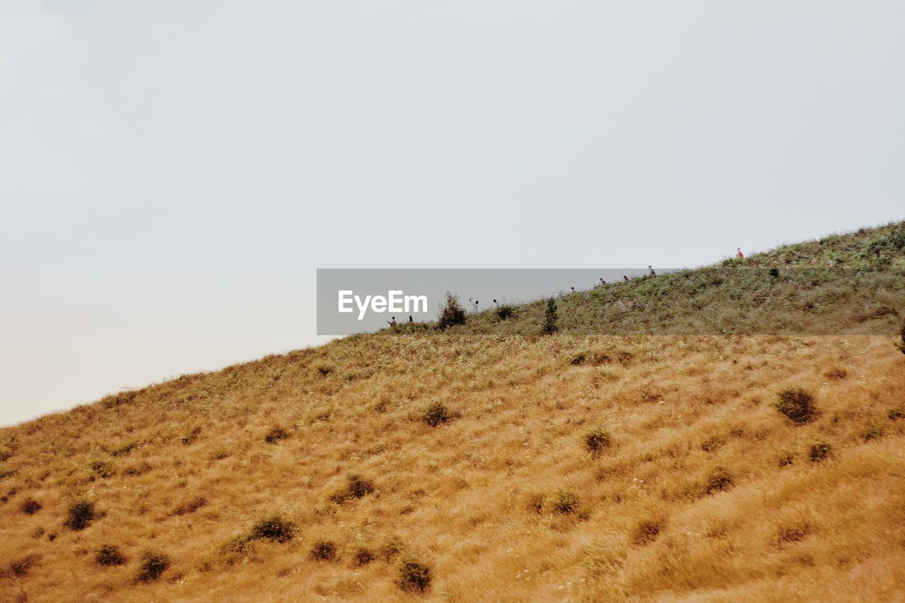 sky, copy space, clear sky, no people, nature, land, day, environment, tranquility, landscape, beauty in nature, tranquil scene, animal, one animal, scenics - nature, animal themes, hill, outdoors, animals in the wild, non-urban scene, arid climate