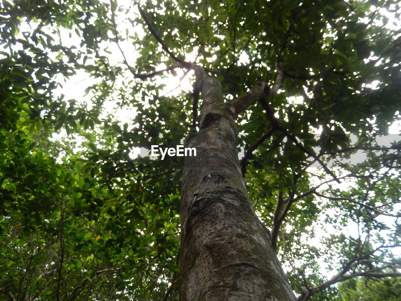 tree, low angle view, growth, nature, tree trunk, outdoors, day, no people, forest, green color, branch, beauty in nature, leaf, animal themes, sky