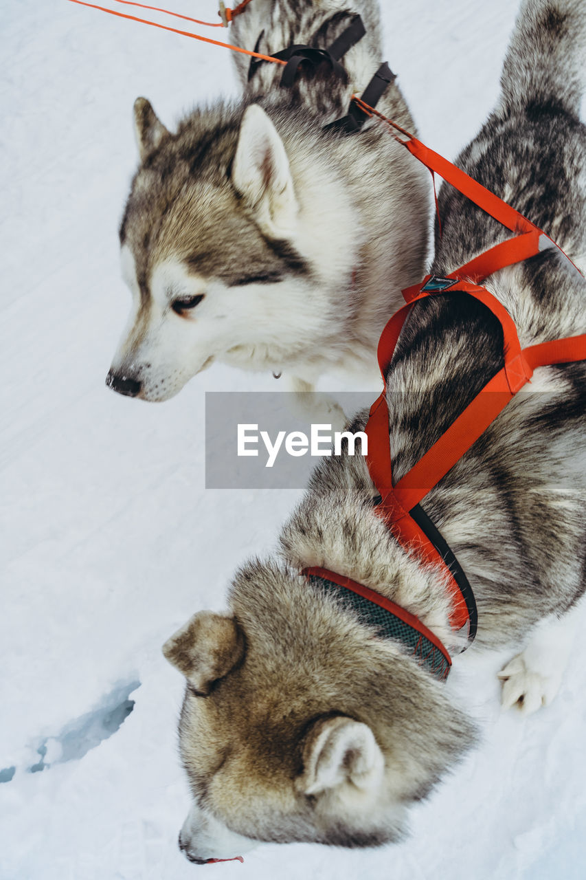 HIGH ANGLE VIEW OF DOG ON SNOW COVERED LANDSCAPE