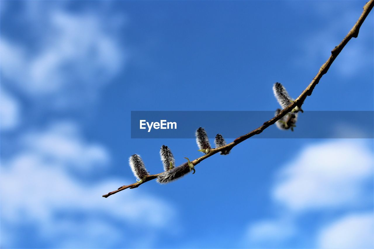 growth, nature, day, no people, low angle view, beauty in nature, outdoors, catkin, flower, fragility, sky, close-up
