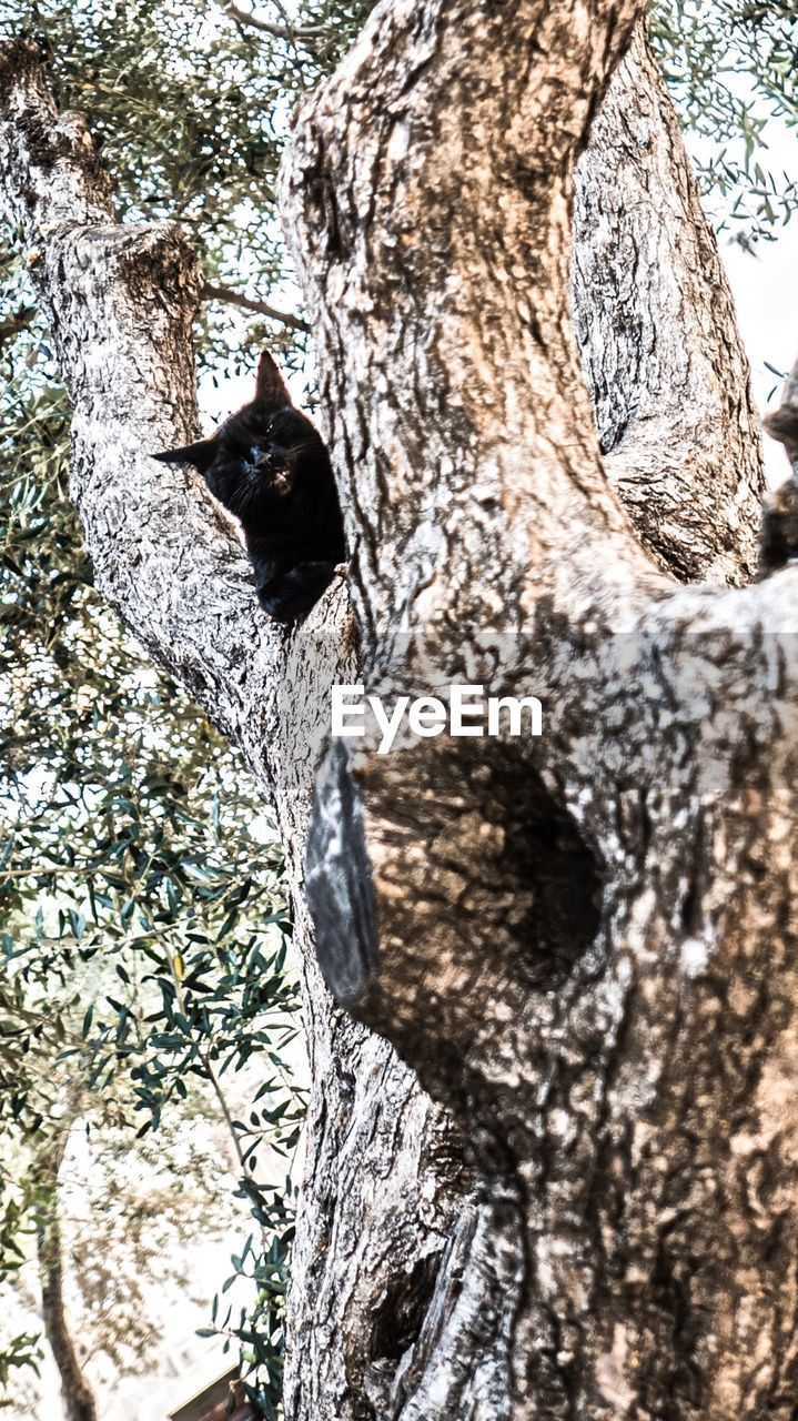 tree, animals in the wild, animal wildlife, tree trunk, trunk, animal, plant, animal themes, day, vertebrate, low angle view, nature, one animal, no people, outdoors, branch, mammal, bird, selective focus, sunlight