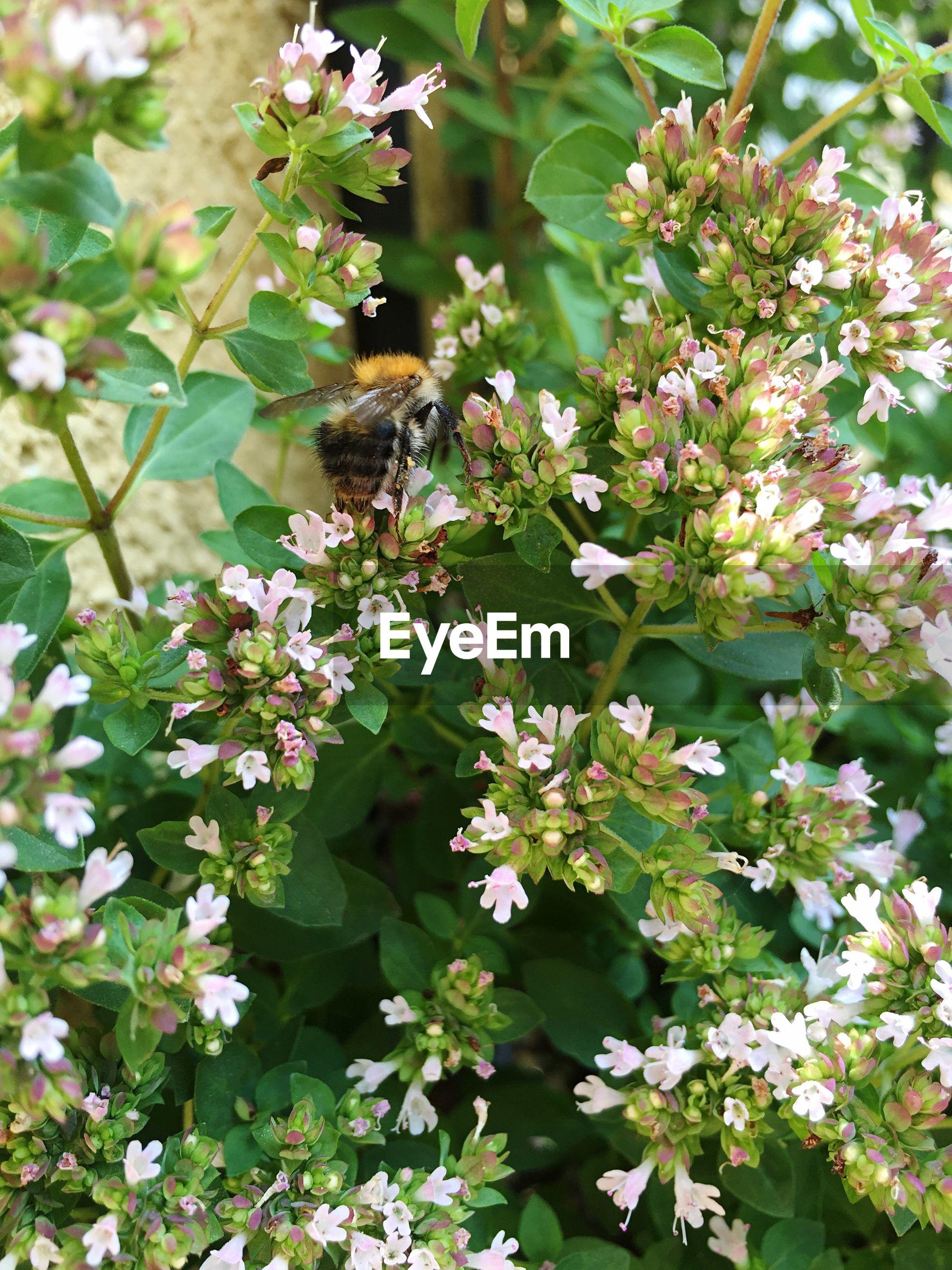 Honey bee on flowering plants