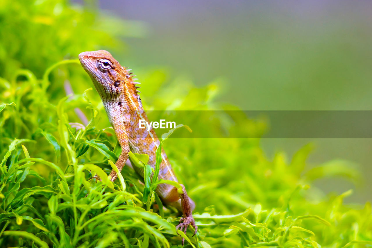 animal, animals in the wild, animal wildlife, one animal, animal themes, green color, plant, close-up, nature, no people, selective focus, growth, vertebrate, day, invertebrate, grass, focus on foreground, outdoors, insect, reptile, marine