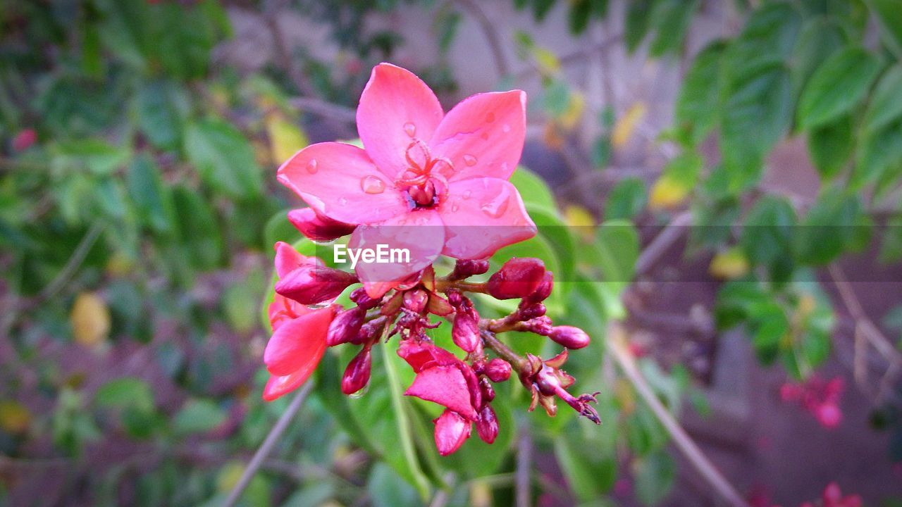 growth, pink color, petal, flower, beauty in nature, nature, fragility, flower head, day, outdoors, no people, close-up, plant, freshness, red, blooming, periwinkle