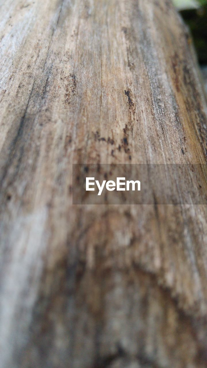 wood - material, close-up, textured, no people, day, outdoors, rough, backgrounds, nature, tree ring, tree