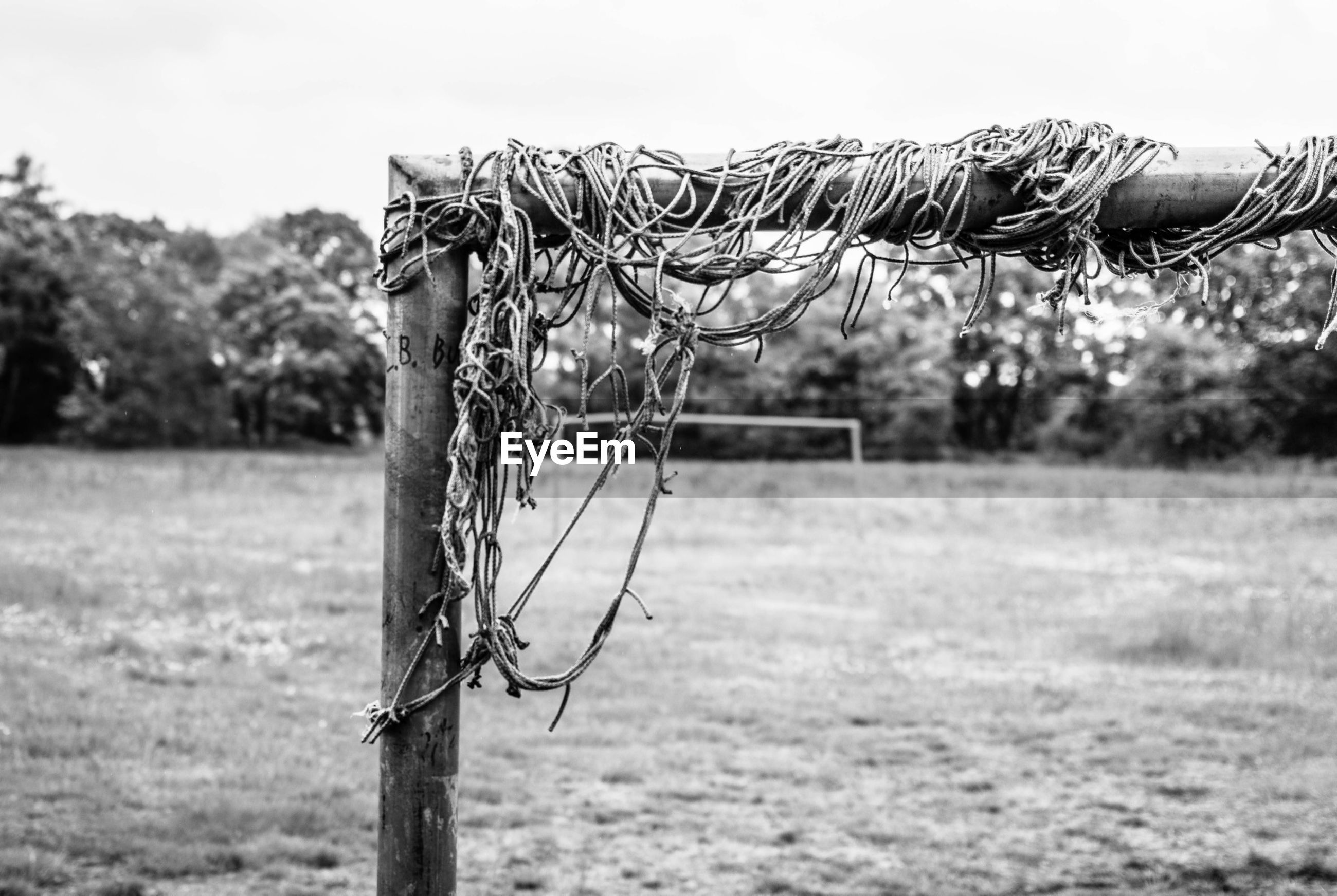 focus on foreground, field, grass, close-up, landscape, sky, dry, nature, tree, barbed wire, day, tranquility, outdoors, selective focus, clear sky, tranquil scene, bare tree, no people, rural scene, fence