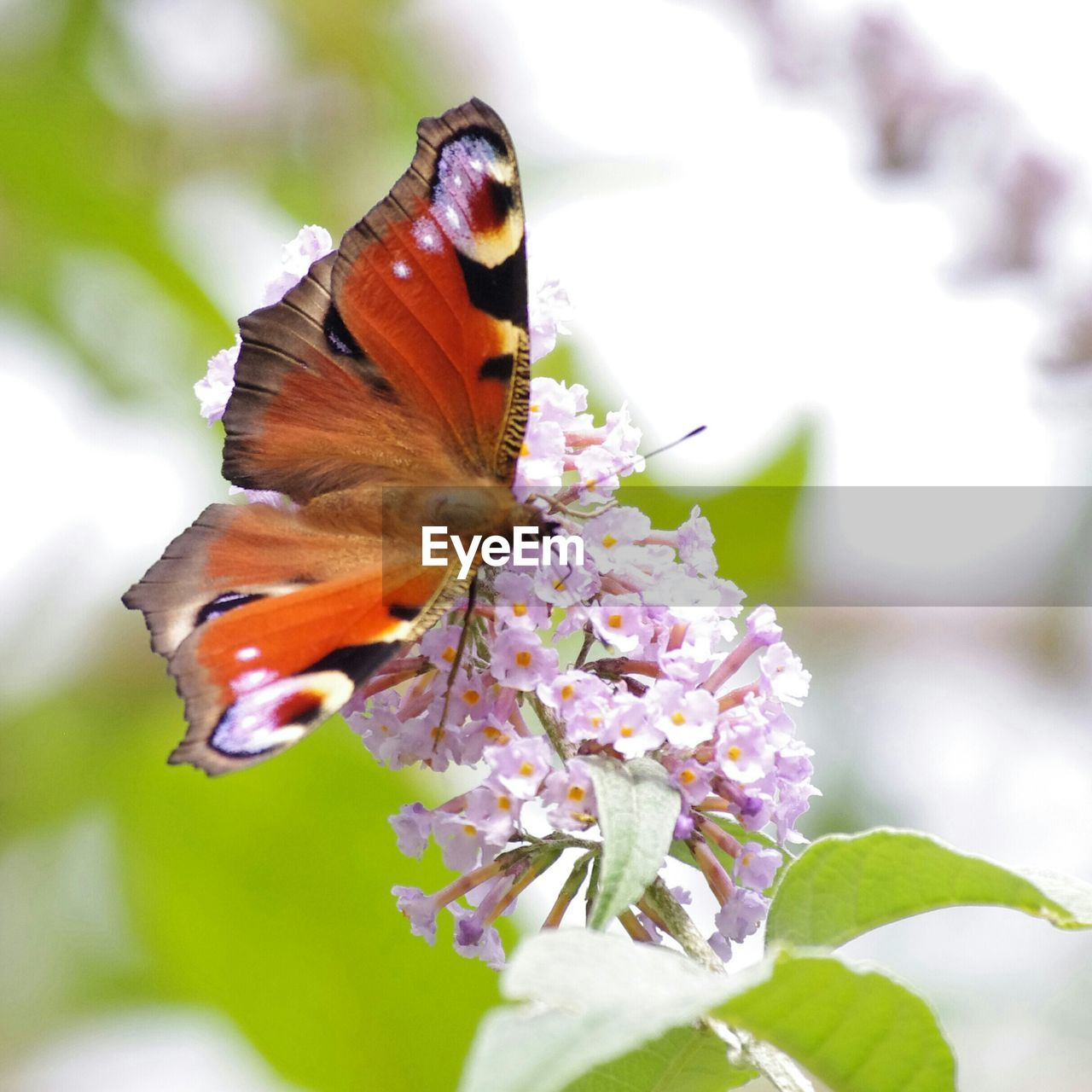 flower, one animal, fragility, animals in the wild, beauty in nature, animal themes, nature, day, freshness, close-up, insect, no people, petal, butterfly - insect, focus on foreground, growth, outdoors, animal wildlife, pollination, flower head