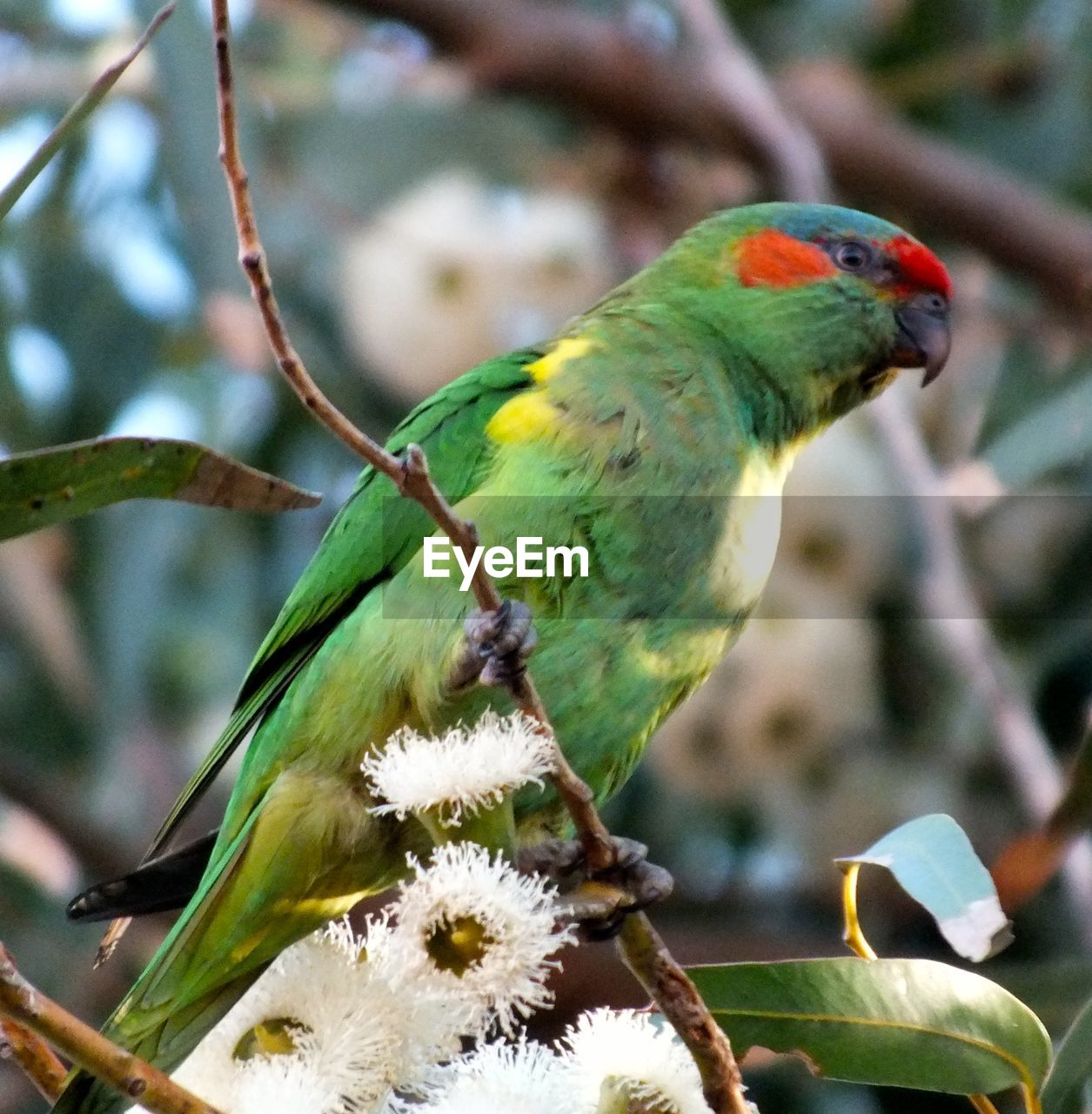 bird, animal themes, animal, vertebrate, animal wildlife, animals in the wild, perching, focus on foreground, plant, close-up, branch, one animal, tree, day, no people, nature, plant part, leaf, beauty in nature, parrot