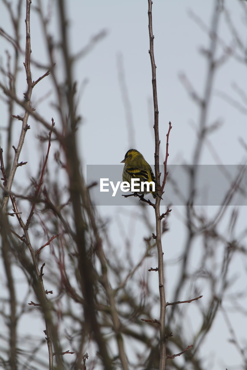 one animal, animals in the wild, animal themes, nature, insect, animal wildlife, branch, focus on foreground, bare tree, day, no people, outdoors, beauty in nature, close-up, perching, tree