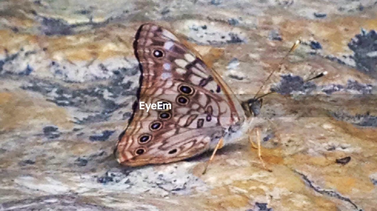 one animal, animal themes, animals in the wild, high angle view, no people, close-up, animal wildlife, nature, butterfly, butterfly - insect, animal markings, day, outdoors