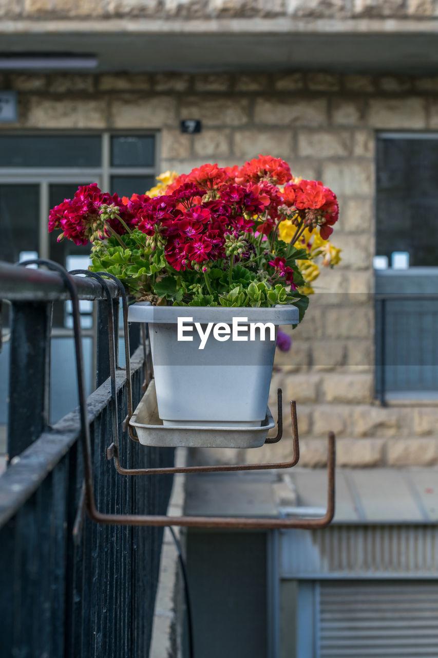 Flower pots on railing against building