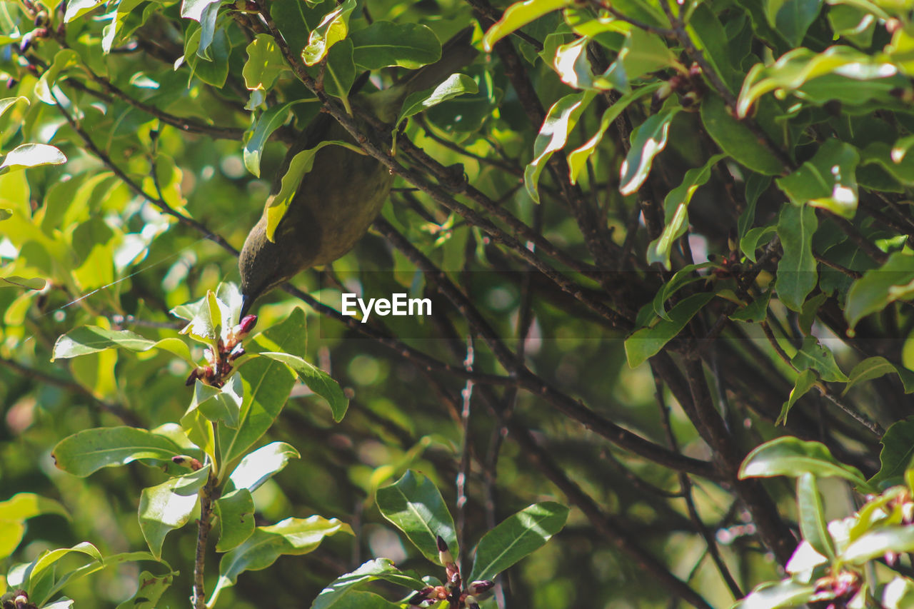 leaf, plant part, growth, plant, green color, tree, no people, nature, food and drink, focus on foreground, beauty in nature, close-up, healthy eating, day, food, freshness, branch, sunlight, low angle view, outdoors