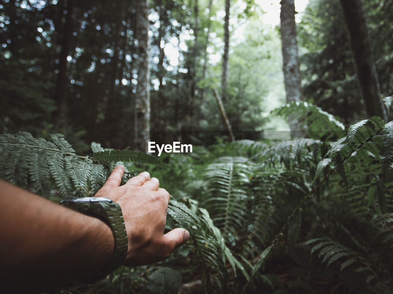 Hand Of Man On Fern In Forest
