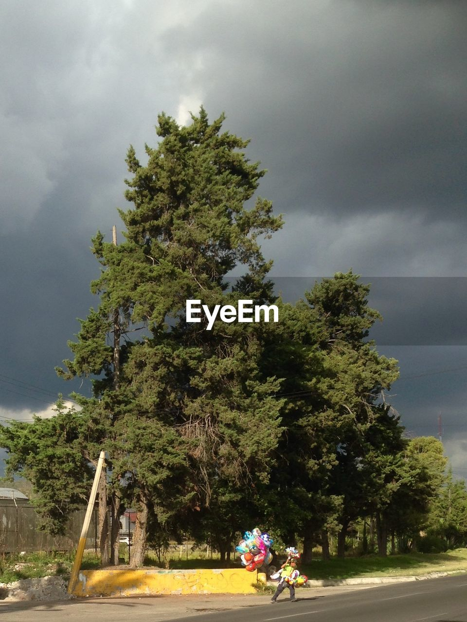 tree, cloud - sky, sky, real people, growth, day, lifestyles, nature, men, outdoors, sitting, childhood, one person, people