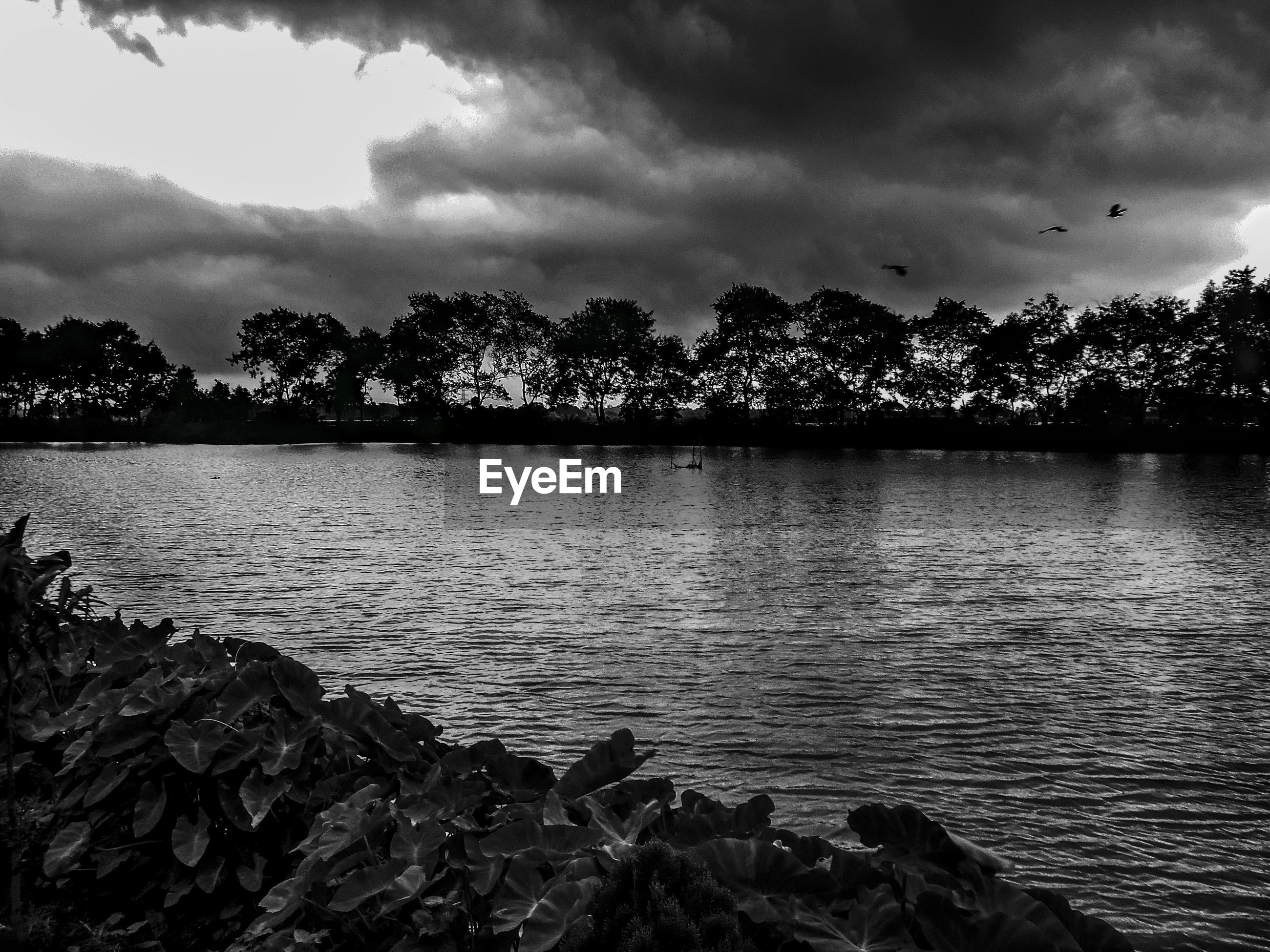 tree, water, tranquil scene, silhouette, tranquility, sky, cloud - sky, scenics, lake, rippled, atmospheric mood, beauty in nature, nature, sea, non-urban scene, cloudy, riverbank, calm, majestic, dramatic sky, outdoors, atmosphere, vacations, no people, moody sky, ocean, seascape