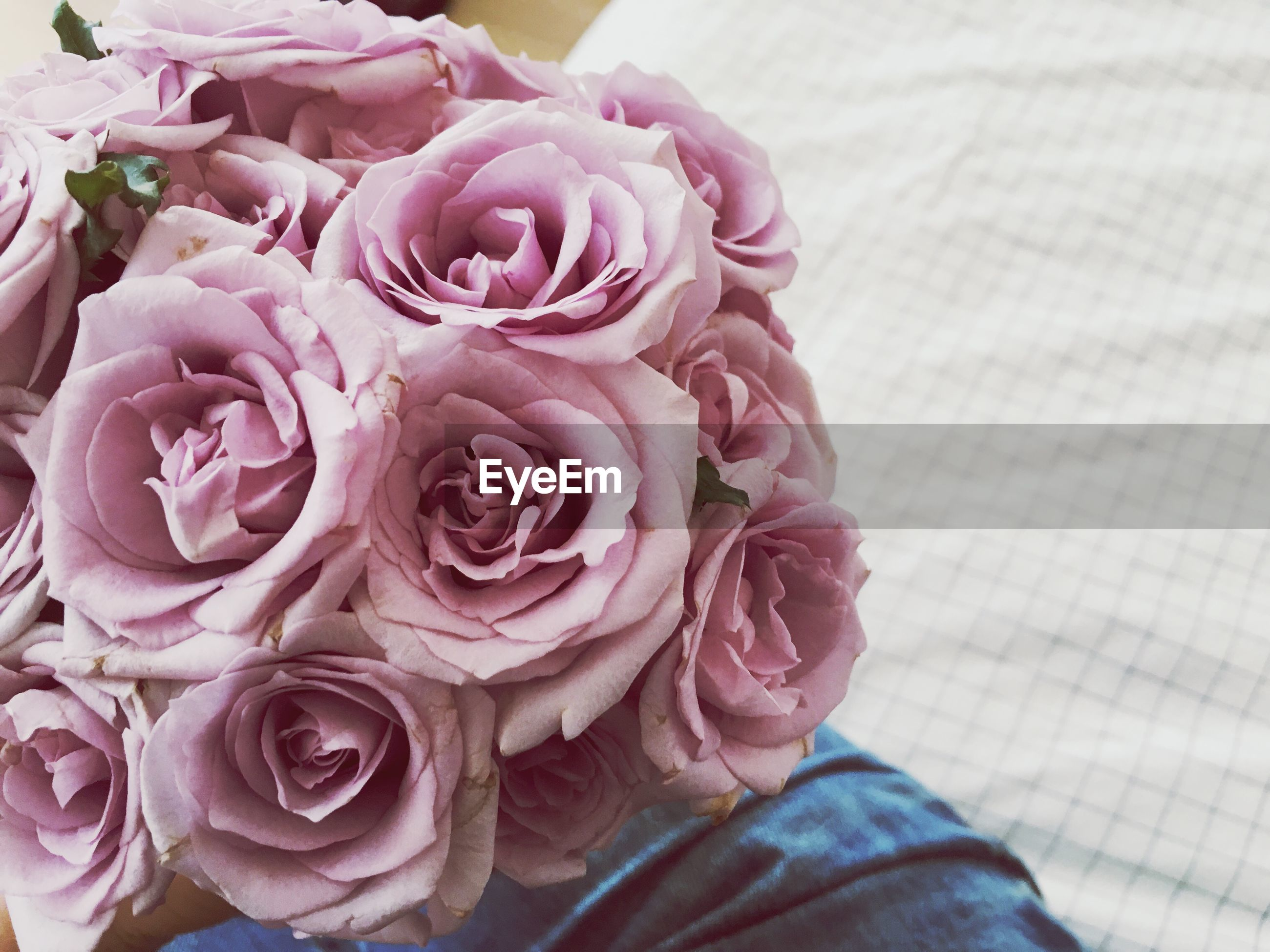 flower, rose - flower, petal, fragility, nature, beauty in nature, flower head, outdoors, close-up, pink color, day, freshness, no people
