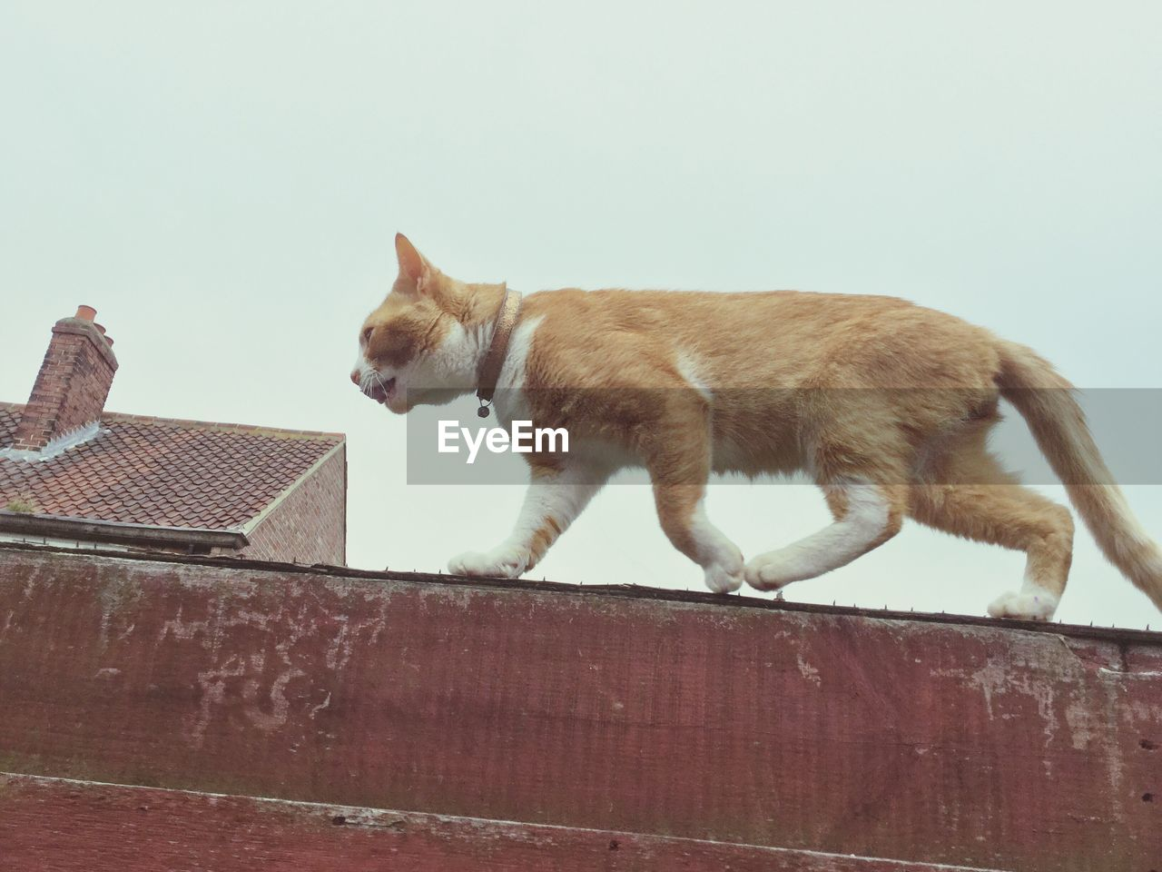 pets, domestic animals, domestic cat, animal themes, one animal, mammal, no people, day, outdoors, roof, dog, feline, sky