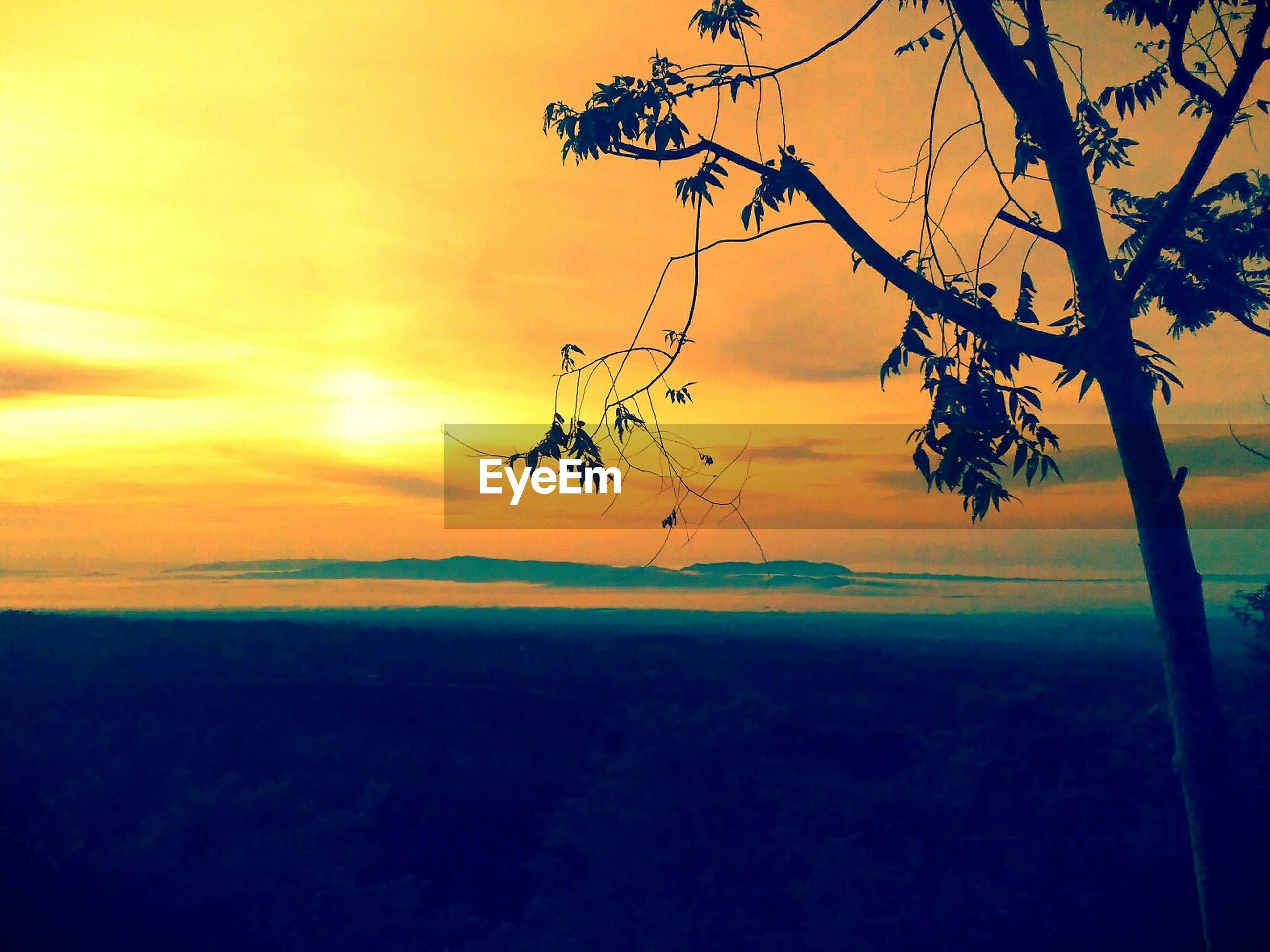 sunset, orange color, silhouette, scenics, tranquility, tranquil scene, beauty in nature, sun, sky, nature, idyllic, tree, branch, landscape, horizon over water, sunlight, outdoors, no people, growth, majestic
