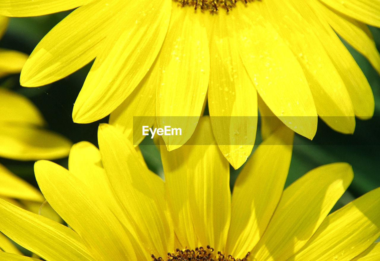 flower, petal, freshness, fragility, beauty in nature, flower head, yellow, nature, growth, plant, blooming, close-up, pollen, no people, springtime, day, selective focus, outdoors, stamen, focus on foreground, backgrounds
