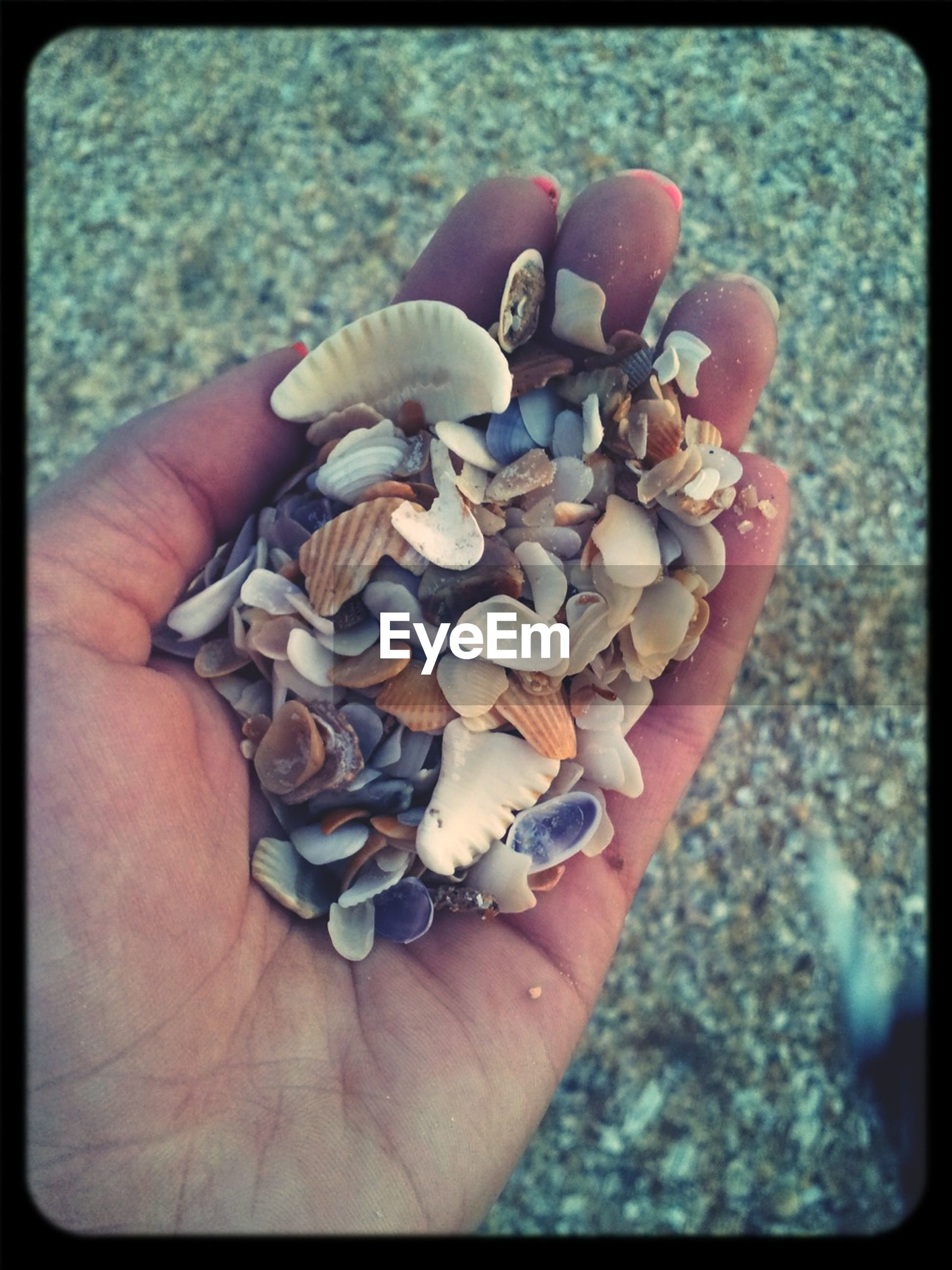 person, part of, holding, human finger, close-up, seashell, cropped, unrecognizable person, personal perspective, transfer print, animal shell, auto post production filter, shell, food and drink, high angle view, focus on foreground, day