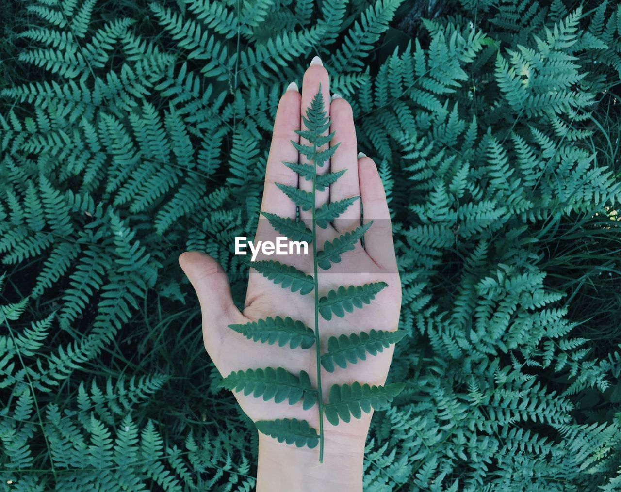 green color, one person, real people, human body part, body part, hand, human hand, unrecognizable person, lifestyles, finger, human finger, close-up, showing, leisure activity, gesturing, day, personal perspective, plant, nature, outdoors, warm clothing, human limb, turquoise colored