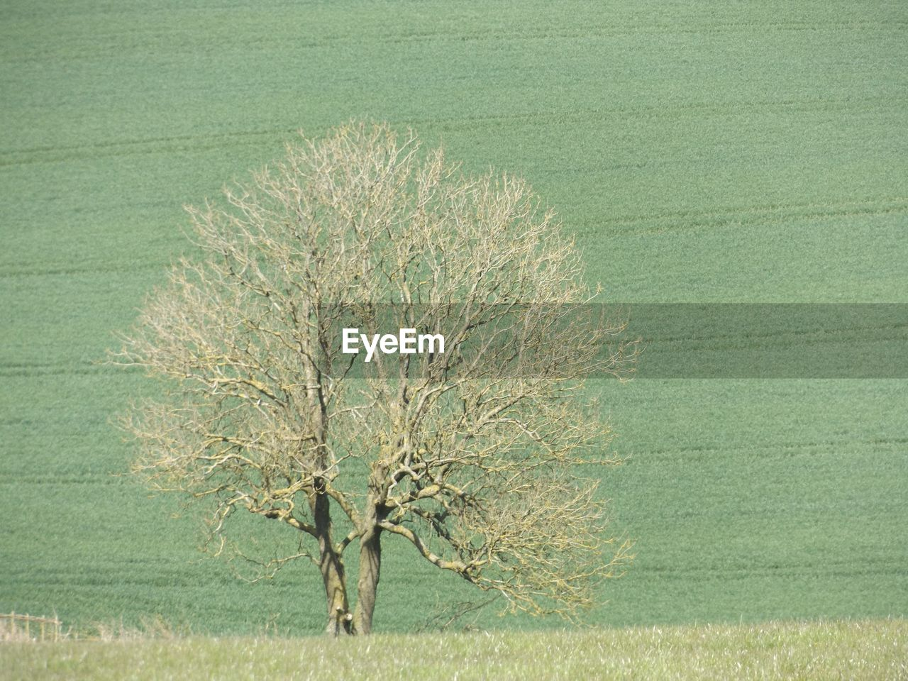lone, isolated, landscape, tranquility, nature, day, tree, beauty in nature, grass, outdoors, bare tree, no people, branch