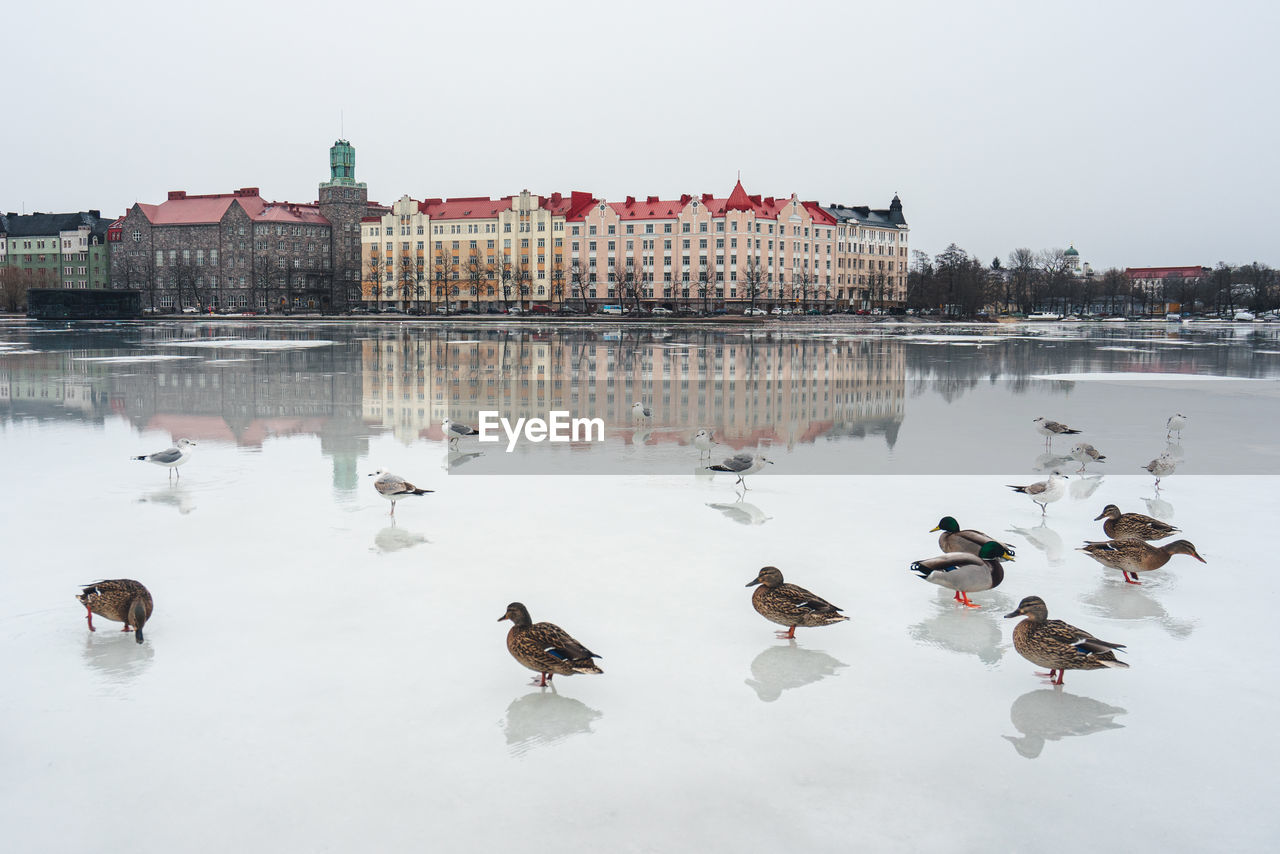 cold temperature, winter, water, bird, vertebrate, group of animals, nature, lake, snow, duck, large group of animals, animals in the wild, animal, animal wildlife, animal themes, architecture, poultry, sky, no people, ice