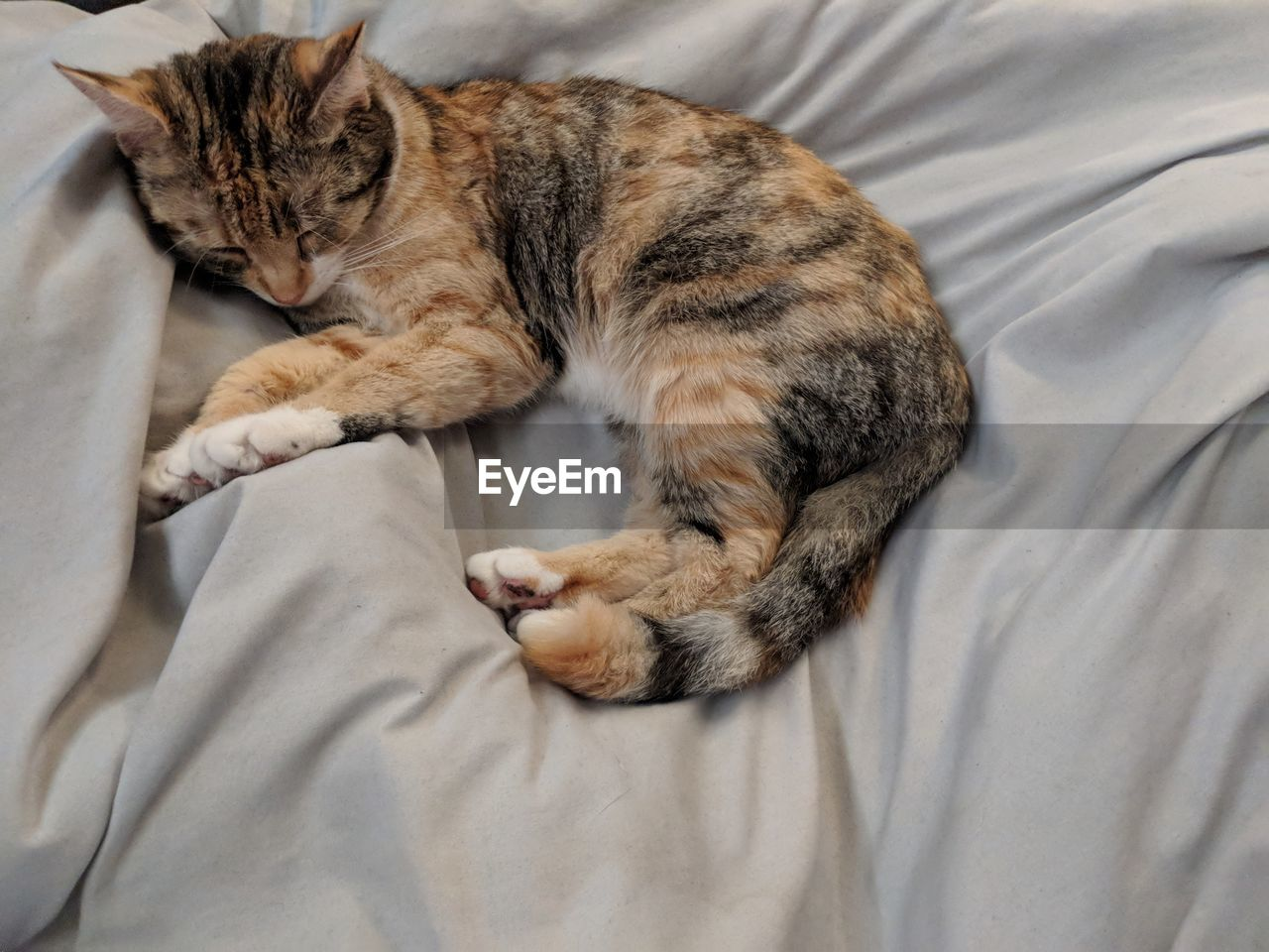 High Angle View Of Cat Sleeping On Bed